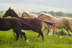 Horses running. Running horses (blurred Royalty Free Stock Image