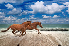 Horses running along seashore Stock Photo