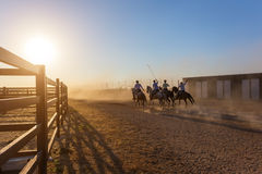 Horses running in corral at sunset. Royalty Free Stock Photo