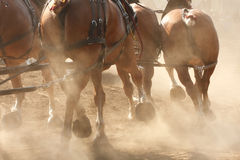 Horses Running through Field. A team of horses hitched to a wagon running through a dusty field Stock Photo