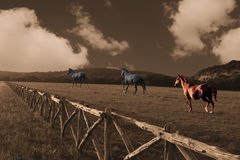 Horses running through a field. Sepia photograph featuring 3 color horses running through a fenced field with hills in the background Stock Photos