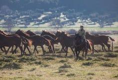 Horses running Stock Photography