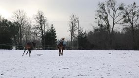 Horses are running on the meadow. Two horses are running on the meadow in winter stock video footage