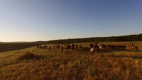 Horses running on a meadow. stock photography