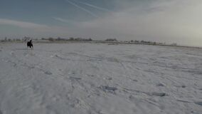 Horses Running Past Through Snow During Colorado Winter