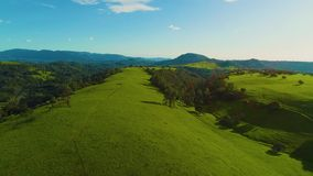 Horses running and pasturing on a country side aerial view green grass live stock mountains and lakes day time sun set. Some lens flares curious horses stock video