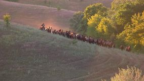 Horses running in slo-mo. stock footage