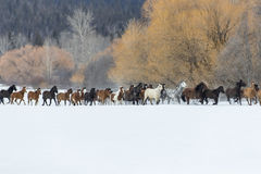 Horses Running In The Snow Stock Photo