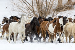 Horses Running In The Snow Stock Image