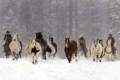 Horses Running In The Snow Stock Photography