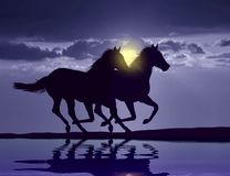 Horses running at sunset Royalty Free Stock Photos