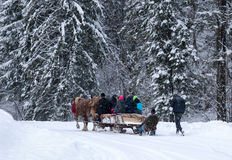 Horses running  with the winter sleigh on the road Royalty Free Stock Images