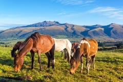 Horses in Rural Ecuador Stock Photos