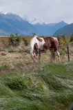Horses in rural New Zealand Stock Images