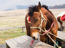 Horses saddled up Stock Image