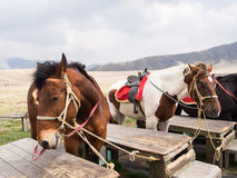 Horses saddled up Royalty Free Stock Image