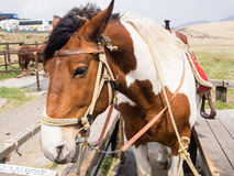 Horses saddled up Royalty Free Stock Photography