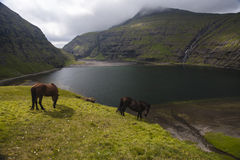 Horses at Saksun. Two horses in the mountains around Saksun, Faeroe Islands royalty free stock photo