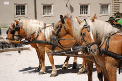 Horses at salzburg. Carriage horses standing at salzburg Royalty Free Stock Image