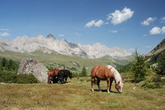 Horses at the San Pellegrino Pass Stock Photos