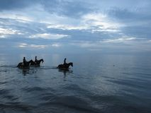 Horses in the sea in twilight evening. Thassos. Greece. royalty free stock photography