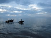 Horses in the sea in twilight evening. Thassos. Greece. royalty free stock photos