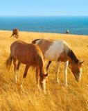 Horses at seashore Stock Photo
