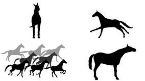 Horses set. 7 different animations. Alpha channel. Alpha matte. 4K. stock footage