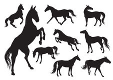 Horses. Set silhouettes of horses in different poses stock illustration