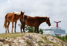 Horses And The Ship Royalty Free Stock Photos