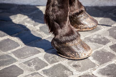 Horses shod hoof cobblestone. Detail of shod horses front hooves on cobblestone street with shadow stock photo