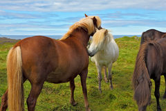 Horses on the shore Stock Photography