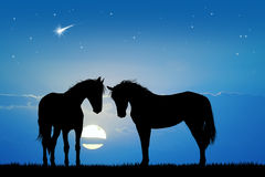 Horses silhouette in love Stock Photo