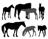 Horses silhouettes. Silhouettes of mare with a foals Royalty Free Stock Photography