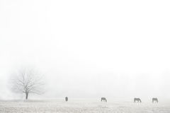 Horses silhouettes on a foggy field Stock Image