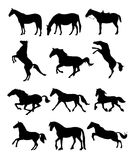 Horses silhouettes Royalty Free Stock Photography