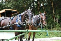 Horses sitting along fence Royalty Free Stock Photography