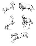 Horses - sketches a pencil Royalty Free Stock Image