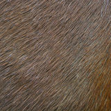 Horses skin Royalty Free Stock Photo