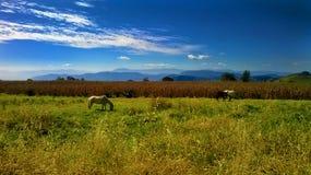 Horses sky landscape stock images