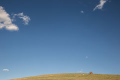 Horses and sky Stock Images