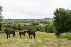 Horses in a slope Royalty Free Stock Photo