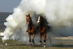 Horses in smoke Stock Images