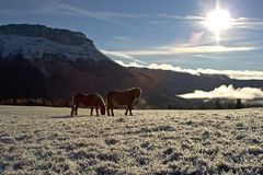 Horses in snow. Horse in snow in mountain Stock Images