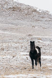 Horses in the snow-covered steppe. Stock Photos
