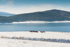 Horses and snow lake Stock Images