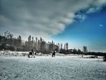 Horses on the snow Royalty Free Stock Photo