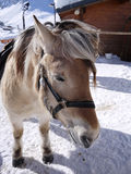 Horses in the snow,Tignes, France Stock Image