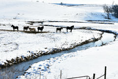 Horses in Snowy Pasture with Stream royalty free stock photography