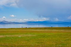 Horses by the Song Kul lake. Herd of horses by the Song Kul lake, Kyrgyzstan Royalty Free Stock Photography